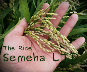 Semeha - производство и продажба на ориз